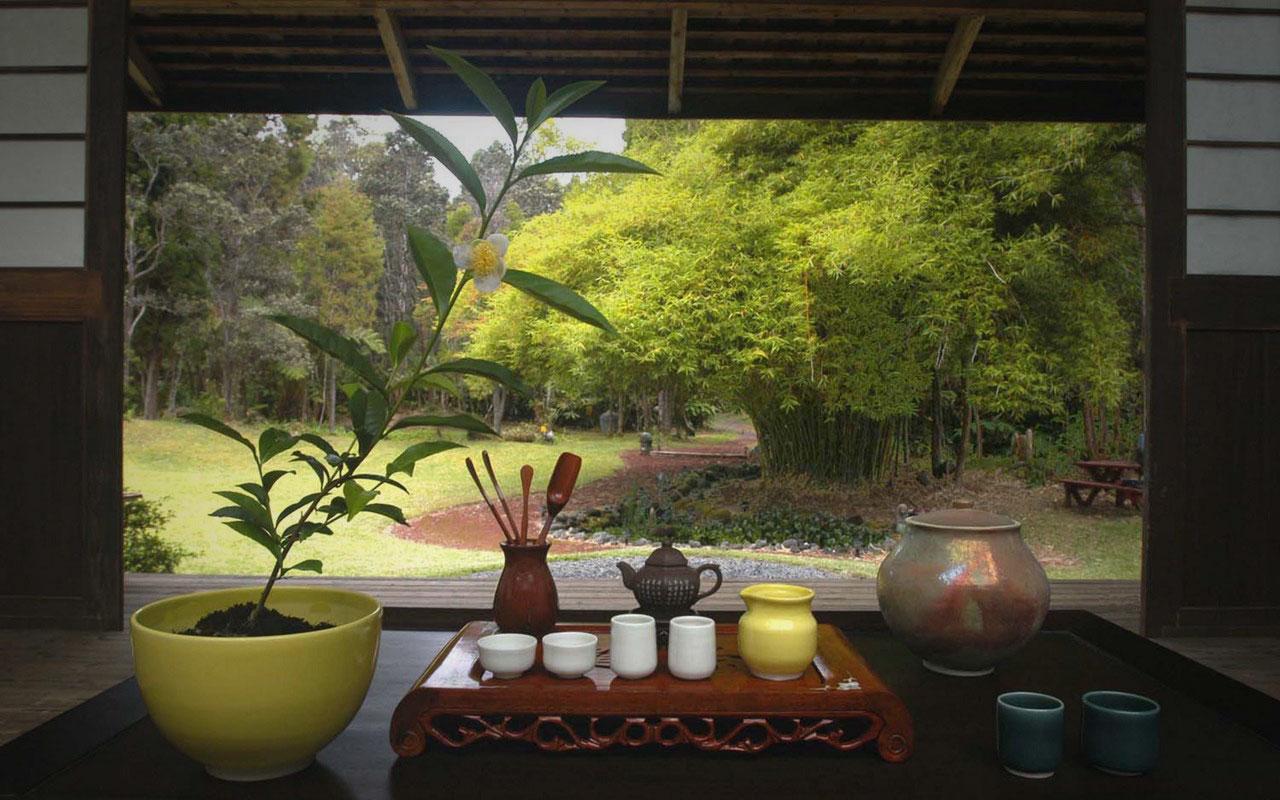 Tea Hawaii